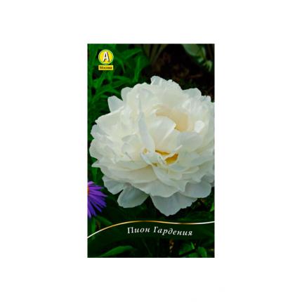Семена Пион травянистый GARDENIA, 1 шт, АЭЛИТА