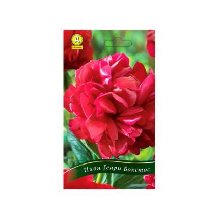 Семена Пион травянистый HENRY BOCKSTOCE, 1 шт, АЭЛИТА