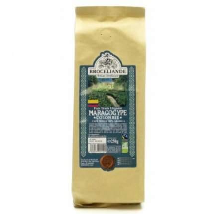 Кофе в зернах Broceliande maragogype Colombie броселианд марагоджип Колумбия 250 г