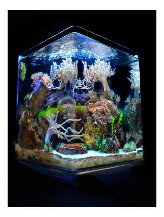 Нано-аквариум Dennerle Nano Cube Marinus Complete PLUS LED, влагозащитная поверхность, 30л