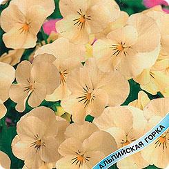 Семена Виола рогатая Принцесс Крим, 5 шт, Гавриш