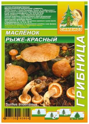 Мицелий грибов Грибница субстрат микоризный Масленок Рыже-красный, 1 л Симбиоз