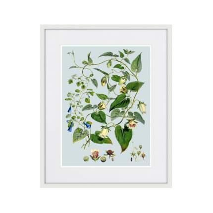 Литография Himalaya Plants Blue And White Flowers, 1869г., 52 x 42 см, Картины в Квартиру