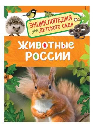 Животные Росси и Энциклопедия для Детского Сада