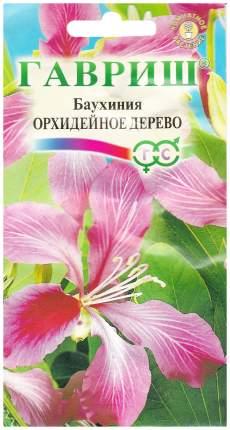 Семена Баухиния Орхидейное дерево, 3 шт, Гавриш