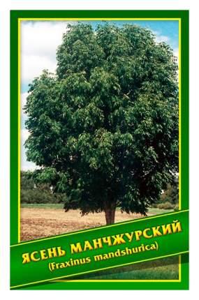 Семена Ясень Манчжурский, 1 г Симбиоз