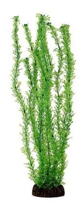 Laguna Растение Лигодиум зеленый, 10 см