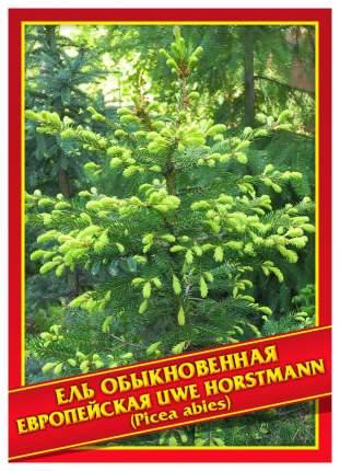 Семена Ель Обыкновенная/Европейская «Uwe Horstmann», 10 шт, Симбиоз