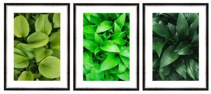 """Коллекция картин в раме 90x40 см """"Зеленые листья"""" Ekoramka BE-110-106"""