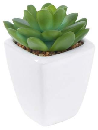 Искусственное растение Hoff Суккулент