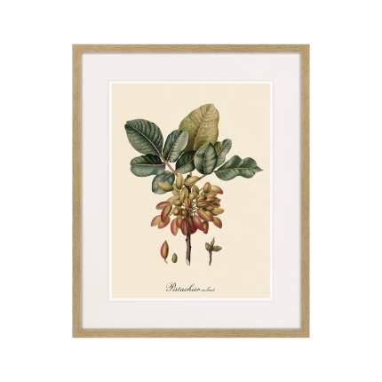 Литография Juicy fruit lithography №8, 1870г., 52 x 42 см, Картины в Квартиру