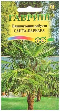 Семена Вашингтония мощная Санта-Барбара, 3 шт, Гавриш