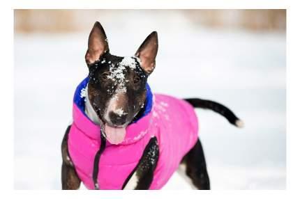 Куртка для собак AiryVest размер M унисекс, розовый, фиолетовый, длина спины 47 см
