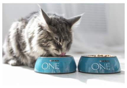 Сухой корм для кошек ONE, для красивой шерсти, курица, цельные злаки, 0,75кг