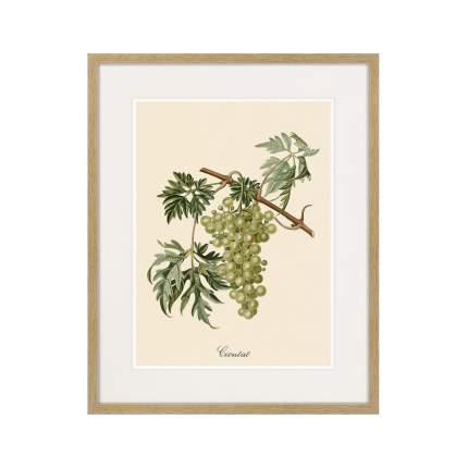 Литография Juicy fruit lithography №13, 1870г., 52 x 42 см, Картины в Квартиру