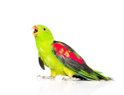 Корма и лакомства для птиц