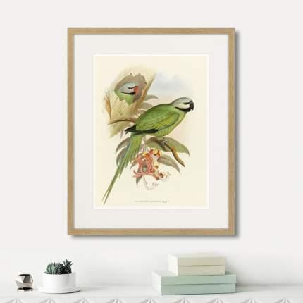 Литография Love parrots II, 1851г., 52 x 42 см, Картины в Квартиру