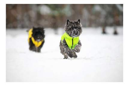 Куртка для собак AiryVest размер XS унисекс, зеленый, желтый, длина спины 30 см
