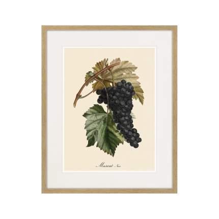 Литография Juicy fruit lithography №12, 1870г., 52 x 42 см, Картины в Квартиру
