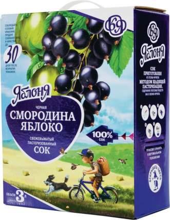 Сок свежевыжатый Яблоня черная смородина-яблоко 3 л