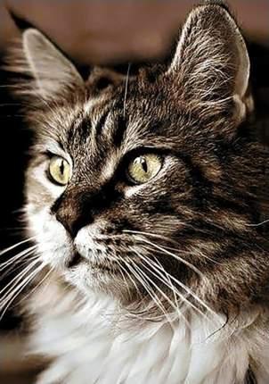 Алмазная вышивка Гранни Домашний кот, 19x27 см