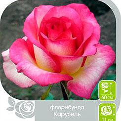 Семена Роза Флорибунда КАРУСЕЛЬ, 1 шт, Семена Алтая