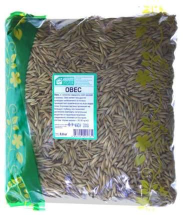 Семена Сидерат Овес, 800 г Зеленый уголок