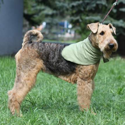Косынка охлаждающая для собак OSSO Fashion, оливковая, L, 70 х 28 см