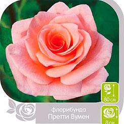 Роза Флорибунда ПРЕТТИ ВУМЕН, 1 шт, Семена Алтая