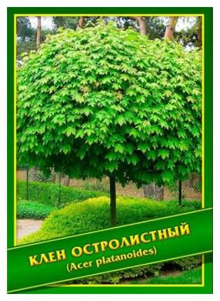 Семена Клен Остролистный, 1 г Симбиоз
