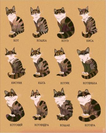 Постер Коты 50х70 в рамке