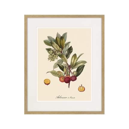 Литография Juicy fruit lithography №4, 1870г., 52 x 42 см, Картины в Квартиру