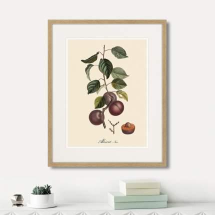 Литография Juicy fruit lithography №6, 1870г., 52 x 42 см, Картины в Квартиру