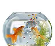 Корма и витамины для рыб