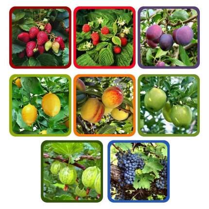 """Прихватка """"Ягоды-фрукты"""", 17х17 см"""