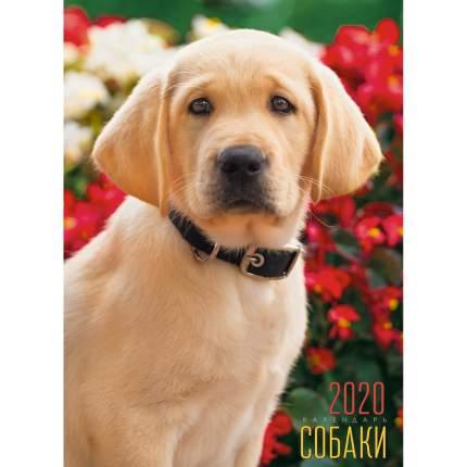 Календарь 2020 Домашние любимцы (Евроспираль), КПВМ2005