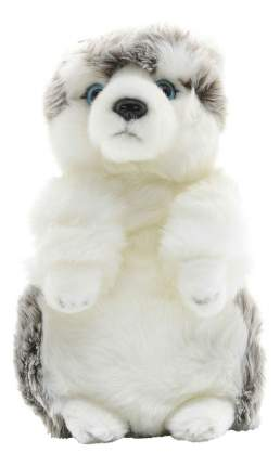 Мягкая игрушка Maxitoys собака Хаски 24 см белый стоячая