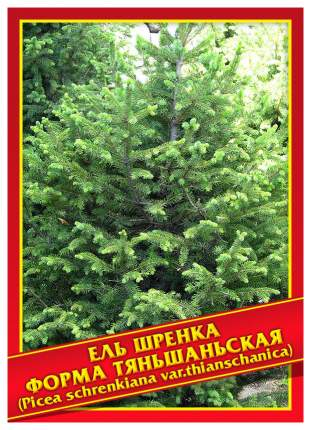 Семена Ель Шренка Форма Тяньшаньская, 10 шт, Симбиоз