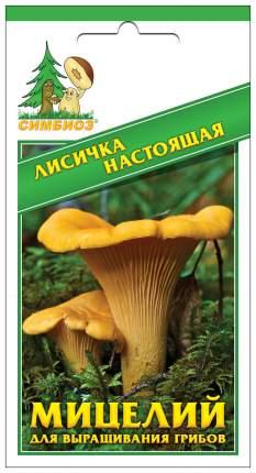 Мицелий грибов Зерновой Лисичка Настоящая, 30 мл Симбиоз