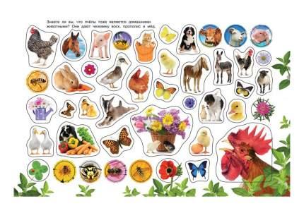 Альбом наклеек. Домашние животные