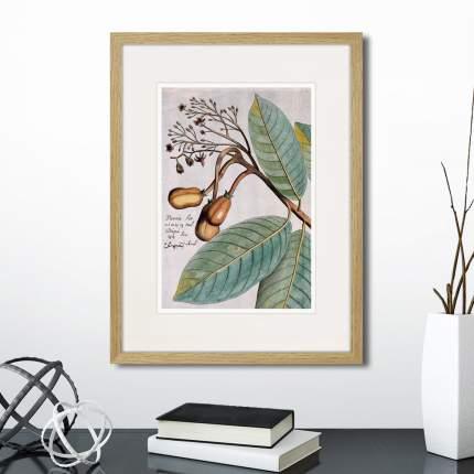 Коллекция Exotic plants of the world №3 (из 2-х картин), Картины в Квартиру