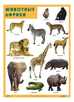 Интерактивный плакат Мозаика-Синтез Животные Африки