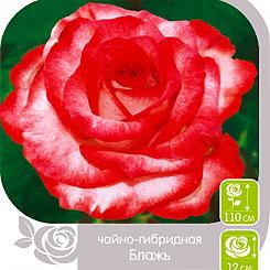 Роза чайно-гибридная БЛАЖЬ, 1 шт, Семена Алтая