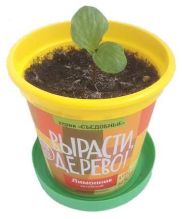 Набор для выращивания Вырасти, дерево! zk-025 Лимонник китайский