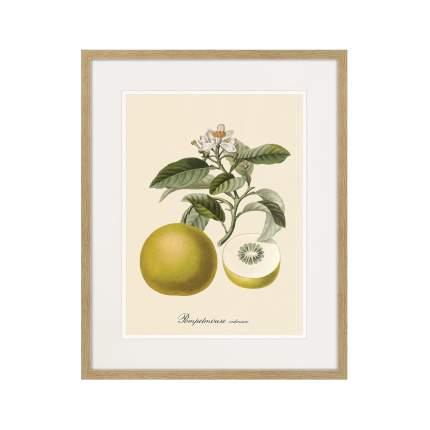 Литография Juicy fruit lithography №10, 1870г., 52 x 42 см, Картины в Квартиру