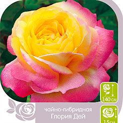 Роза чайно-гибридная ГЛОРИЯ ДЕЙ, 1 шт, Семена Алтая