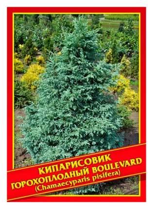 Семена Кипарисовик Горохоплодный «Boulevard», 0,2 г Симбиоз