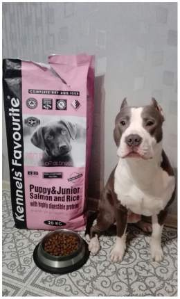 Сухой корм для щенков Kennels Favourite Puppy and Junior, лосось, 20кг