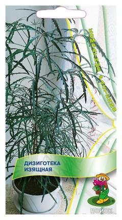 Семена Дизиготека Изящная, 5 шт, Поиск