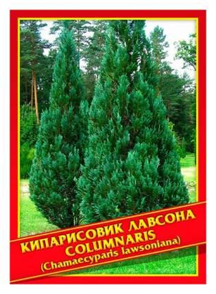 Семена Кипарисовик Лавсона «Columnaris», 0,2 г Симбиоз